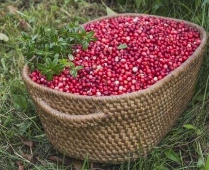 פולי קפה בטעמים פירותיים