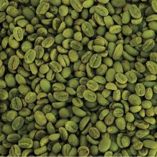 פולי קפה ירוק קוסטה ריקה | 1 ק''ג